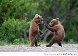 baby bears fighting
